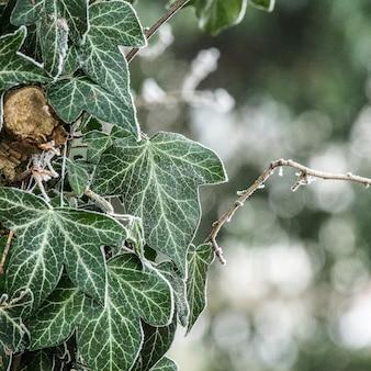 Selektywne fokus strzał pięknych zielonych liści na rozmytym tle z bokeh świateł