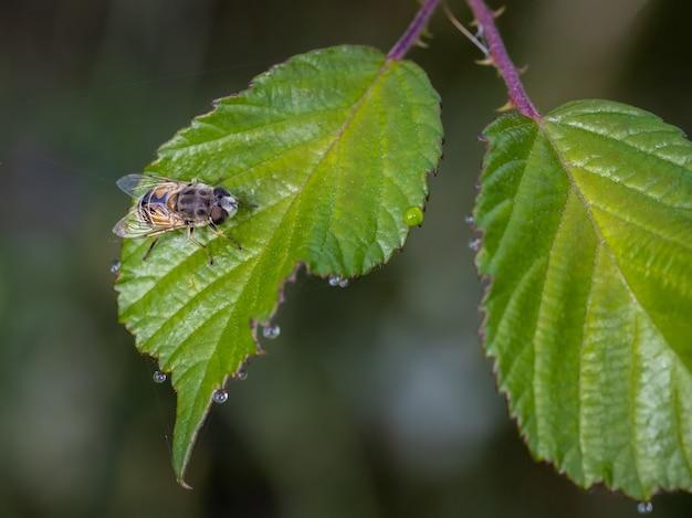 Selektywne fokus strzał pszczoły siedzącej na liściu