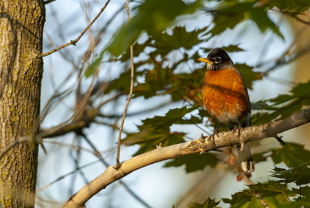 Selektywne fokus strzał ptaka siedzącego na gałęzi drzewa z liśćmi