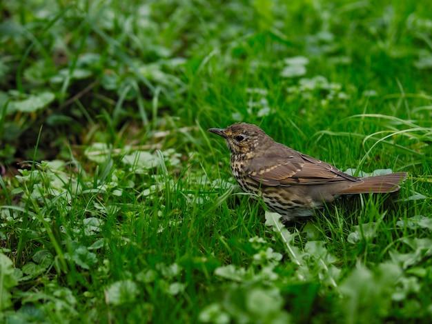 Selektywne fokus strzał ptaka w trawiastym polu