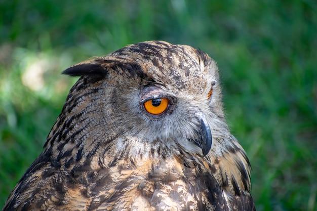 Selektywne fokus strzał sowa brązowy i czarny siedzi w trawiastym polu