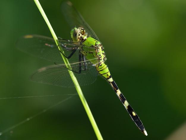 Selektywne fokus strzał z dragonfly siedzi na kwiatku