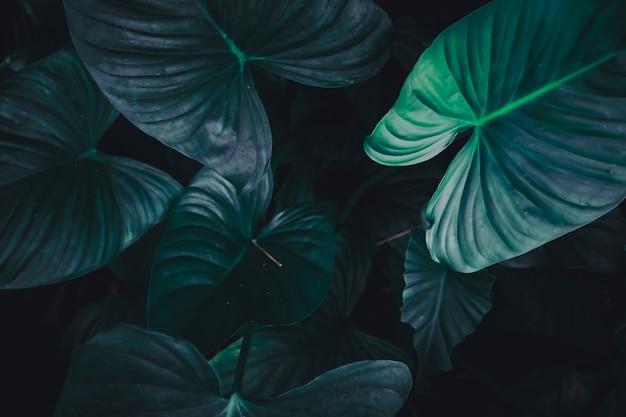 Selektywne fokus zamknięty tropikalnych letnich zielonych liściach.