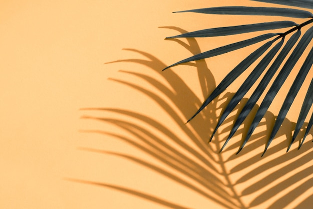 Selektywne skupienie egzotycznego liścia kokosa z cieniem na pomarańczowo