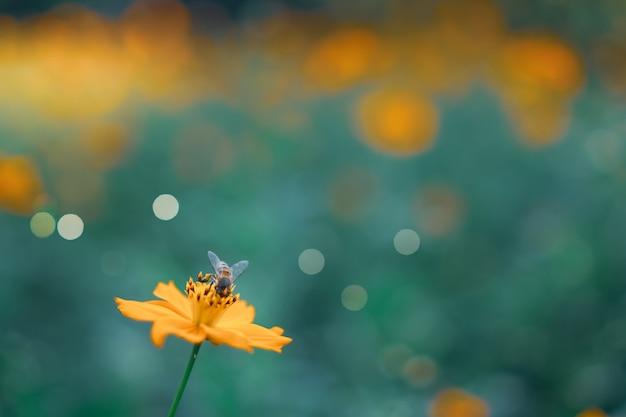 Selektywne skupienie pięknych kolorowych kwiatów z letnim bokeh tłem. styl vintage kolor.