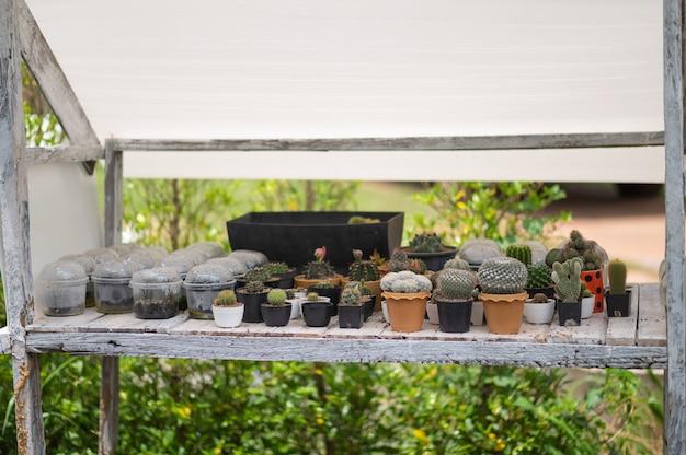 Selektywne skupienie roślin pustynnych w małych roślinach. sukulenty i kaktusy w różnych donicach betonowych. dekoracja domowa.