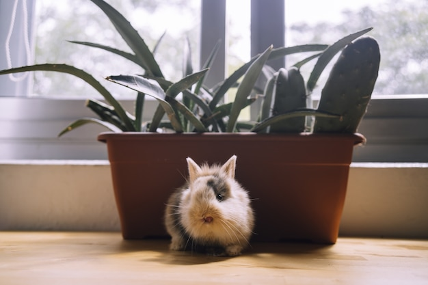 Selektywne skupienie się na ładny mały brązowy i czarny króliczek na parapecie