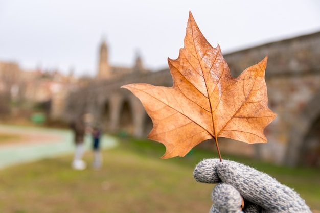 Selektywne skupienie się na osobie w rękawiczkach trzymającej suchy liść klonu w ciągu dnia