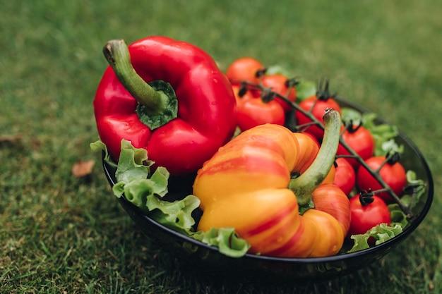 Selektywne skupienie się na zdrowej czerwonej i żółtej papryce i pomidorach leżących na czarnej płycie w ogrodzie. świeże warzywa smaczne przebywające na trawie w lecie. pojęcie świeżości i gastronomii.