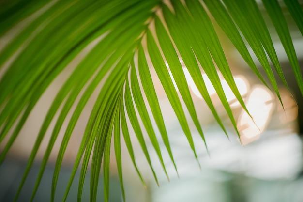 Selektywne skupienie się na zielonych liściach