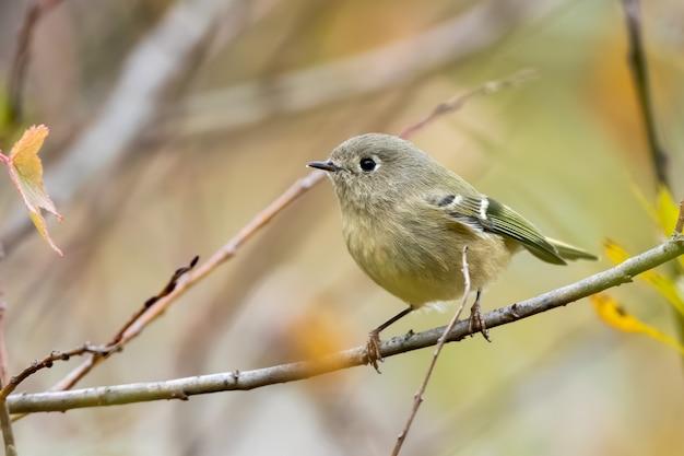 Selektywne skupienie zbliżenie ptaka siedzącego na pniu drzewa