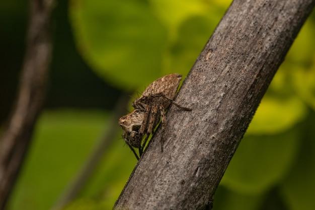 Selektywne ujęcie ostrości brązowego pająka na gałęzi drzewa