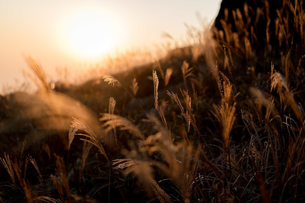 Selektywne ujęcie ostrości gałęzi sweetgrass na wzgórzach