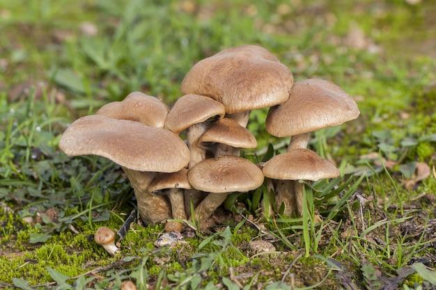 Selektywne ujęcie ostrości grupy brązowych małych grzybów rosnących w lesie