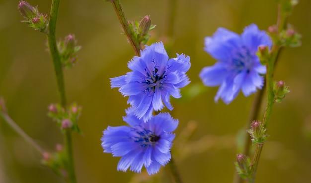 Selektywne ujęcie ostrości kwitnących niebieskich kwiatów w ogrodzie