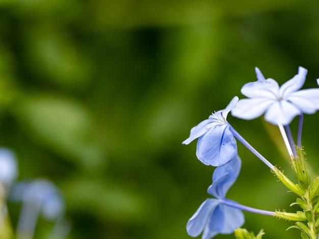 Selektywne ujęcie ostrości małych jasnoniebieskich kwiatów i zielonych liści roślin