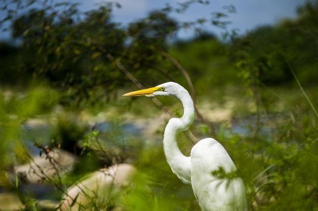 Selektywne ujęcie ostrości pięknego białego żurawia siedzącego na polu