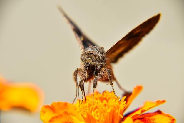 Selektywne ujęcie ostrości pięknego motyla siedzącego na jasnożółtym kwiecie
