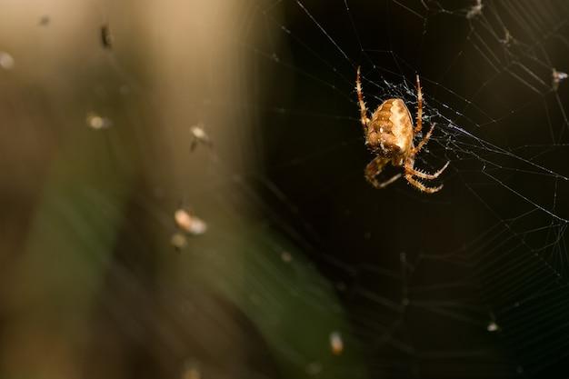 Selektywne ujęcie ostrości przerażającego pająka na splątanej sieci w ciemnym lesie