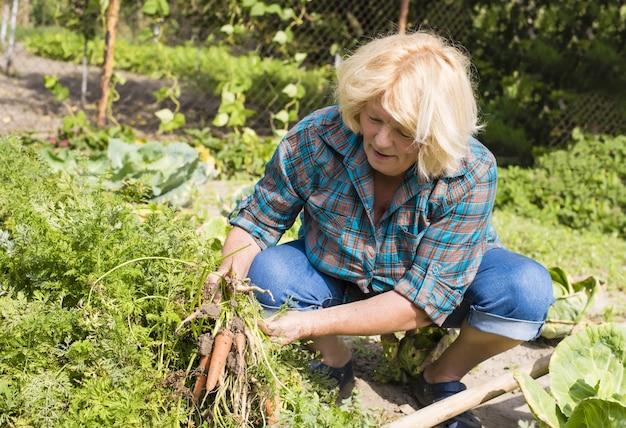 Selektywne ujęcie ostrości starszej kobiety zbierającej warzywa z ogrodu
