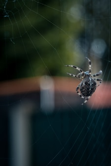 Selektywny fokus zbliżenie czarny pająk chodzenie po sieci web