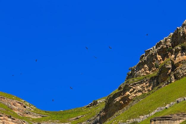 Sęp płowy (gyps fulvus) leci na niebie nad górami na kaukazie północnym w rosji