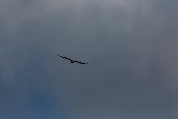 Sęp w serra del montsec, lleida, pireneje, hiszpania