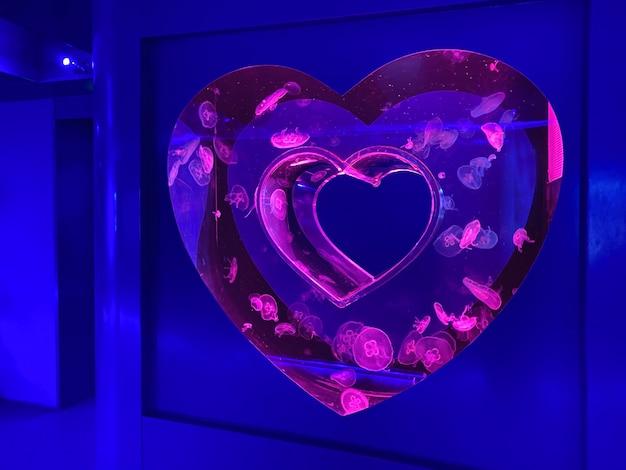 Serce neonowego akwarium z meduzą, muzeum meduz