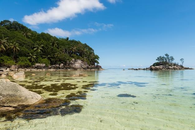 Seszele wybrzeże widok na skały i wodorosty