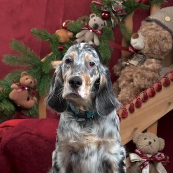 Seter angielski w dekoracji świątecznej