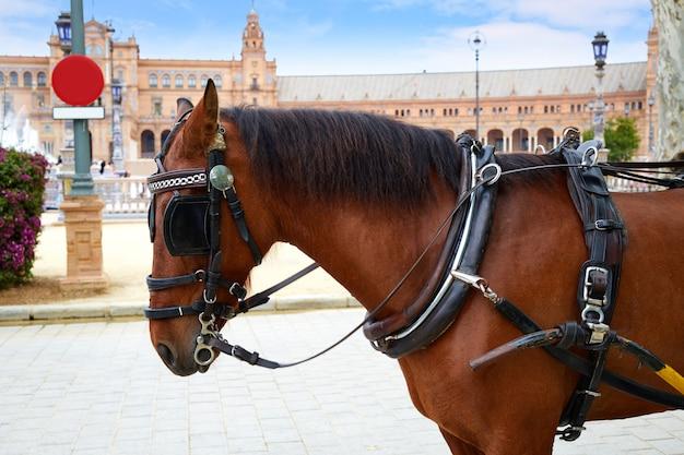 Sevilla plaza de espana koń andaluzja