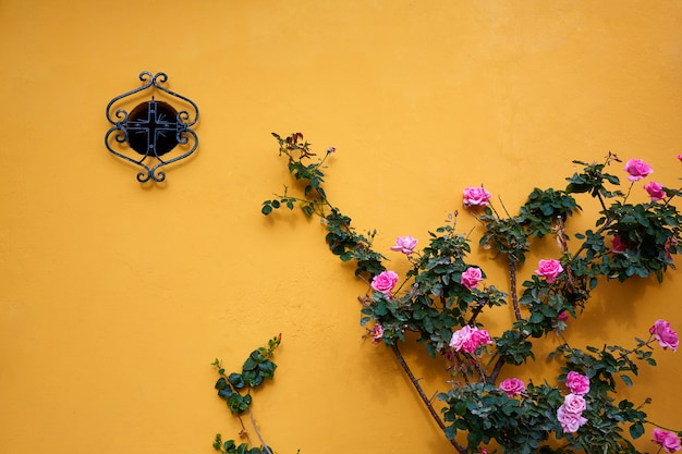 Sewilla macarena barrio fasady sevilla hiszpania