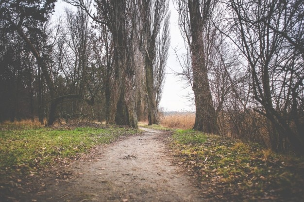 Sezon jesień ścieżka