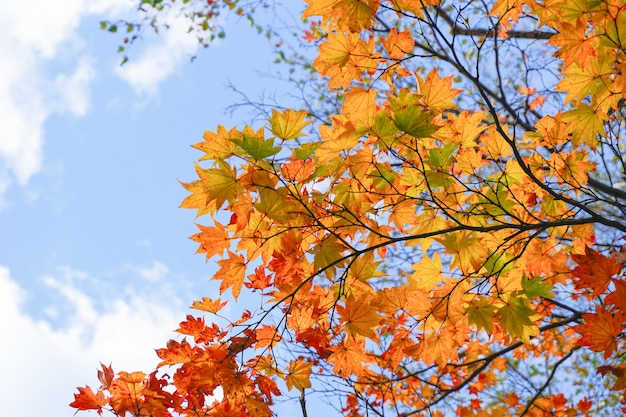 Sezon jesienny w maruyama park