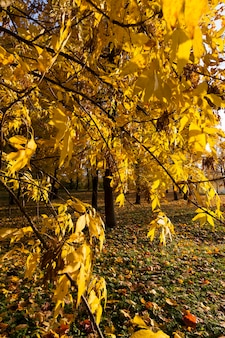Sezon jesienny