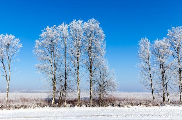Sezon zimowy ze śniegiem w parku lub lesie, mroźna zima w parku lub w lesie podczas mrozów, drzewa liściaste bez liści w sezonie zimowym