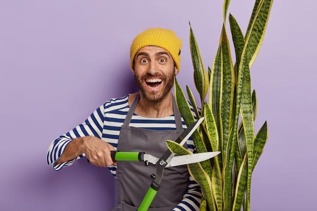 Sezonowe przycinanie roślin domowych. pozytywny nieogolony ogrodnik trzyma duże nożyce do żywopłotu, zajmuje się hodowlą roślin