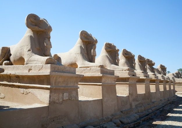 Sfinksy ramionowe w świątyni karnak