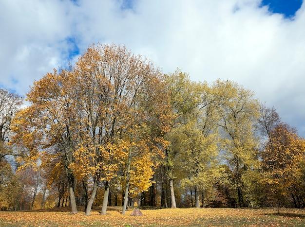 Sfotografowane jesienią drzewa i liście, lokalizacja parku,