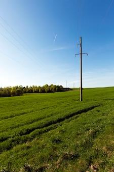 Sfotografowane w zbliżeniu słupy elektryczne znajdujące się w polu