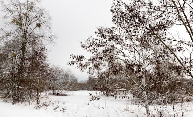 Sfotografowany śnieg po opadach śniegu podczas mrozu. zbliżenie z małą głębią ostrości