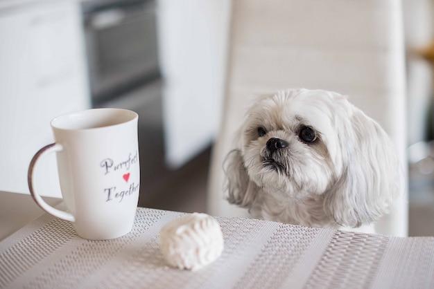 Shih tzu pies siedzi przy stole