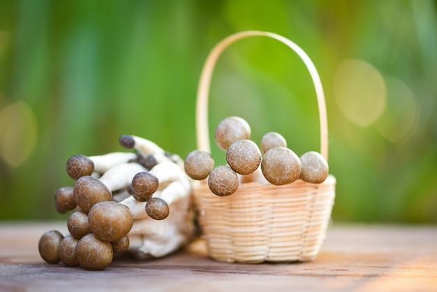 Shimeji grzyb na koszowym drewnianym i naturalnym zielonym tle