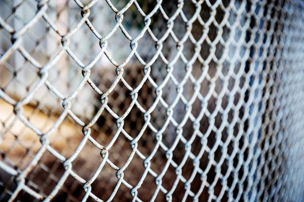 Siatka żelazna w fermie zwierząt.