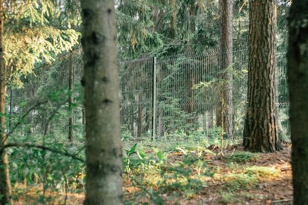 Siatkowe przezroczyste zielone ogrodzenie w środku lasu
