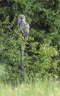 Siedząca sowa siedzi na drzewie w lesie