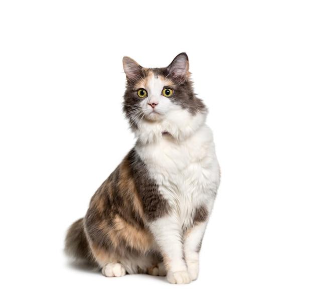 Siedzący kot rasy mieszanej