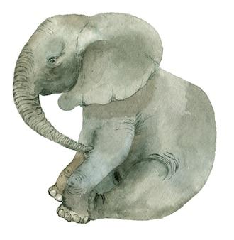 Siedzący śmieszny słoń