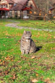 Siedzenie kota przez pole wiosna krokusy i dom na tle