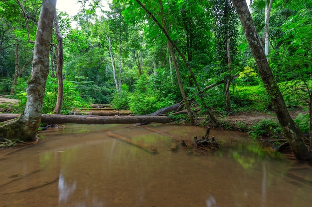 Siklawa w lesie tropikalnym, pa wai siklawa, tak prowincja, tajlandia